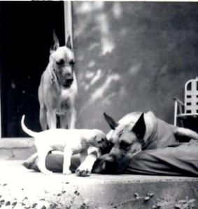 3 dogsimg001