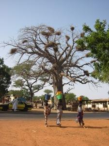 Senegal 2 women, tree